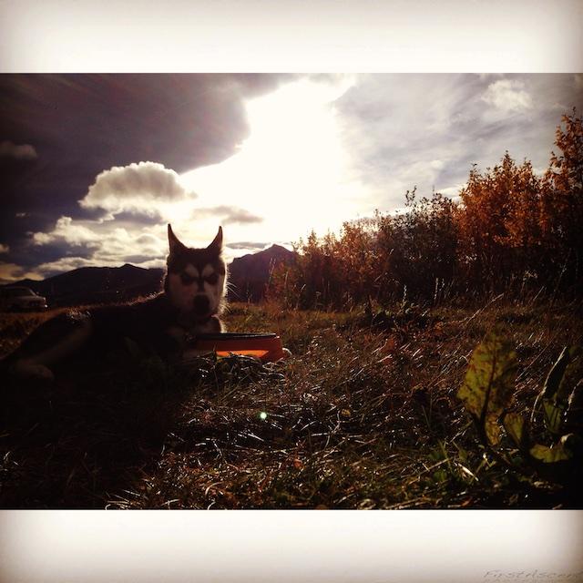 Aurora's Alaskan Life AuroraSept3