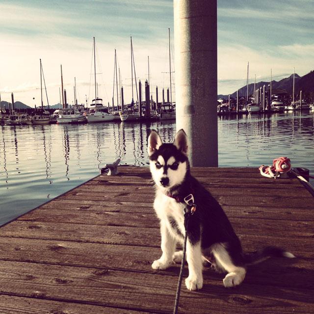 Aurora's Alaskan Life AuroraSeward1